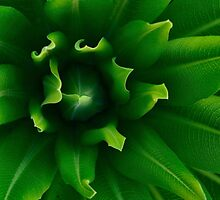Green Leaf by ColinGaleImages