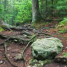 Trail of Roots and Rocks by April Koehler