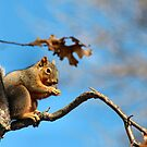 Fat Squirrel by Keala