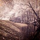 Never Never Creek by Mel Brackstone