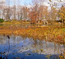 Fall at Petrie Island, Ottawa, ON by Shulie1