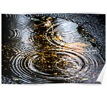 Rain Puddle in Autumn Poster