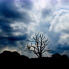 The Lone Tree by liberthine01