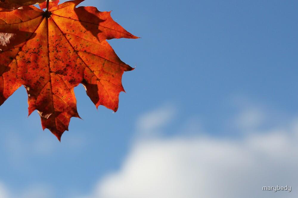 Maple Sky by marybedy