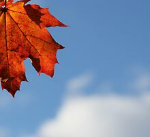 Maple Sky by marybedy