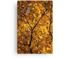 Yellow Maple 3 Canvas Print