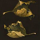 Sycamore Leaves ~Stacked by Barbara Wyeth