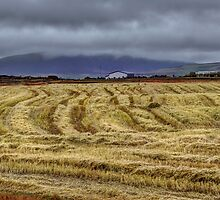 Icelandic Field by Peter Hammer