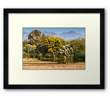 Majestic Trees Framed Print