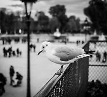 Perched seagull looking down at people in Jardin des Tuileries, Paris by Olivier Sohn