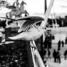 Seagull taking off in Jardin des Tuileries, Paris, France by OlivierImages