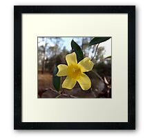 ButterCup Two Artistic Photograph by Shannon Sears Framed Print