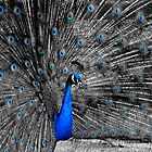 Selective Coloring Peacock by Christopher Hanke