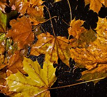 Wet Leaves on the Dirty Ground by Dennis Maida