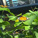 Butterfly trio by AmandaWitt