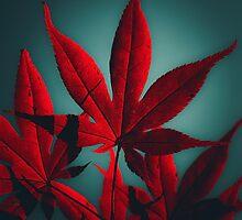 Japanese Maple in Crimson by va103