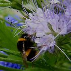 Bee on Purple by ElsT