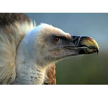Griffon Vulture  Photographic Print