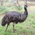 Emu by ScenerybyDesign