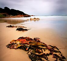 Green Point Tasmania by Angelika  Vogel