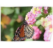 Monarch on Lantana II Poster