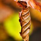 Beech Leaf by Susie Peek