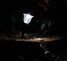 Garden Solar Light in the Dark by jojobob