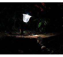 Garden Solar Light in the Dark Photographic Print
