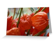 Chinese Lantern Plant, mixed media card Greeting Card