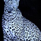 Leopard by Becky Pike