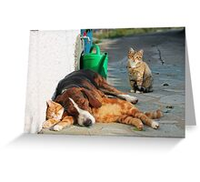 Best Frinds, Cat & Dog, Greece Greeting Card