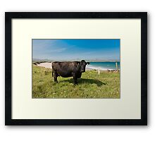Kerry Cow Framed Print