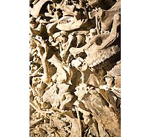 Bones with Skull on Bottom Photographic Print