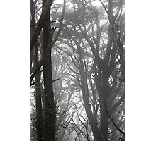 Mt Davidson Trees and Fog Photographic Print