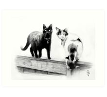 Two cats on a wooden fence Art Print