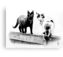 Two cats on a wooden fence Canvas Print