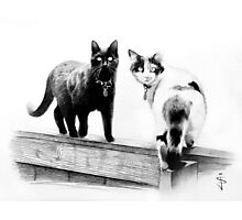 Two cats on a wooden fence Photographic Print