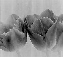 Three Tulips in Black and White by Cee Neuner