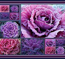 Decorative Fancy Kale by MotherNature2