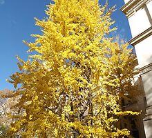 Autumn Colors, City Hall Park, Lower Manhattan, New York City by lenspiro
