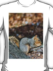 Lonely Squirrel T-Shirt