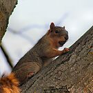 Snobby Squirrel by Keala