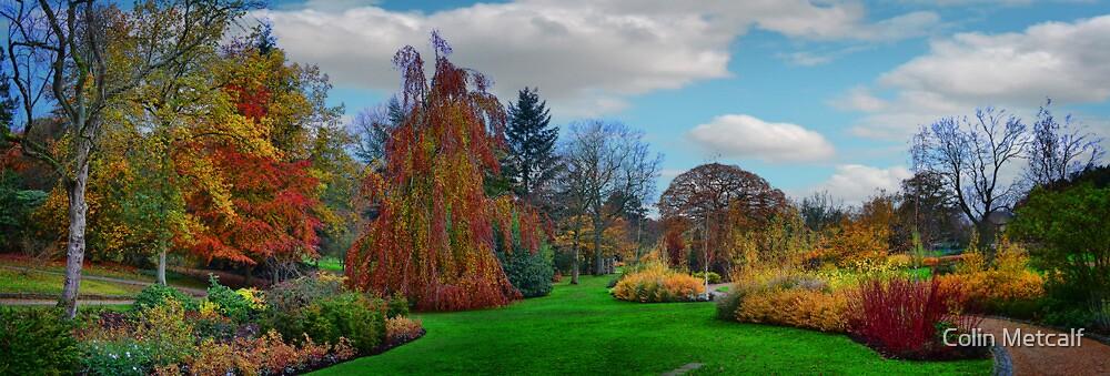 Autumn Panorama by Colin Metcalf