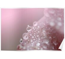Fizzy pink Poster