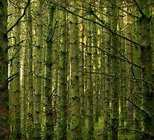 The Forest - Northern Ireland by mattnnat