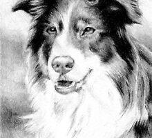 Australian Shepherd Dog by Oldetimemercan