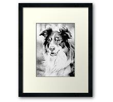 Australian Shepherd Dog Framed Print