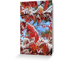 Snow on Red Leaves Greeting Card
