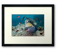 Titan Trigger over Reef Framed Print