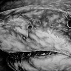 From the Dark... A Shark! by LisaBuchfink